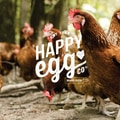 Example of online user guide - Happy Egg Co